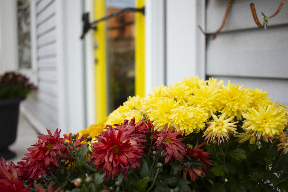 The Flower Factory Flowers Front Door